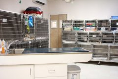 23-virtual-tour-speak-animal-hospital.jpg
